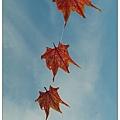 風箏高掛_4.jpg