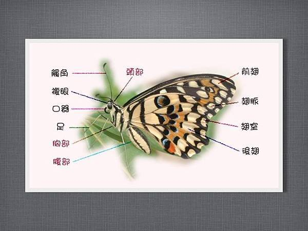 110915有趣的繪畫課~蝴蝶.003.jpg