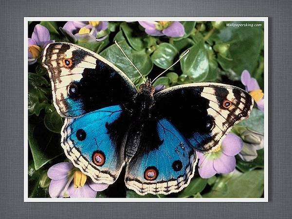 110915有趣的繪畫課~蝴蝶.004.jpg