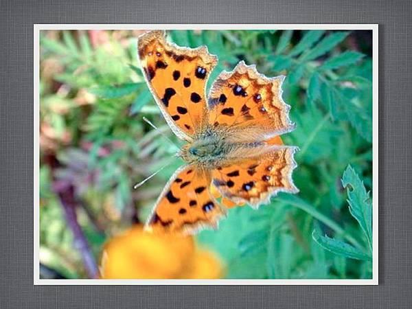 110915有趣的繪畫課~蝴蝶.006.jpg
