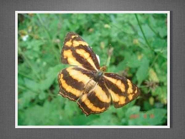 110915有趣的繪畫課~蝴蝶.007.jpg