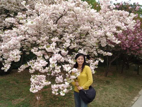 joyce和櫻花