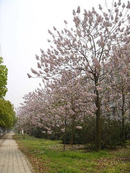 新生新苑北邊不知名的花