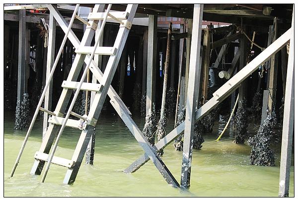 柱子下方黏滿了貝殼