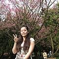 2011花季,來去陽明山賞花