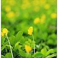 美麗的小黃花兒