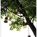 樹上幾盞吊燈