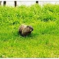 突然發現土撥鼠