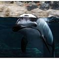 噢是海豚!!
