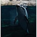 很漂亮的海豚~