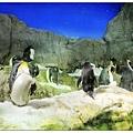 超可愛的企鵝~!!