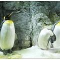 企鵝很活潑會動來動去
