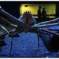 日本海溝的蜘蛛蟹