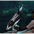 遊客逗著海豚