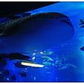 鯨鯊的下巴...XDD