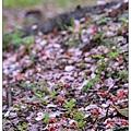 滿地紅花堆積憔悴損...