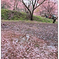 地上鋪了一層花瓣~
