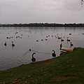 遊】Lake Monger