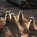 遊】Perth Zoo