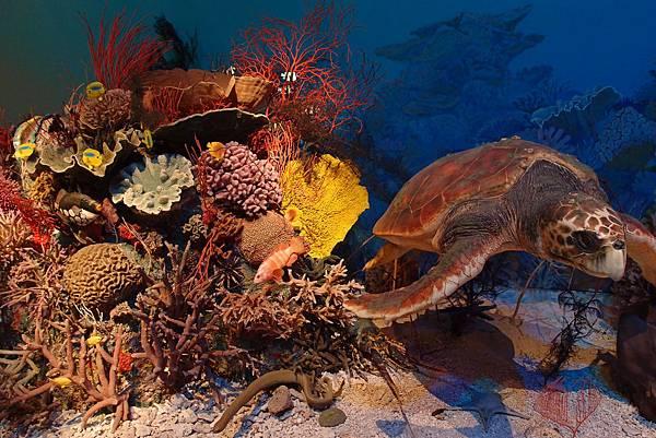 活】海底生態