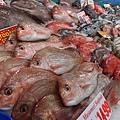 好多魚魚魚魚魚魚魚~