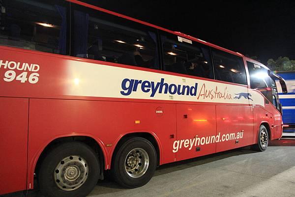 greyhound!!