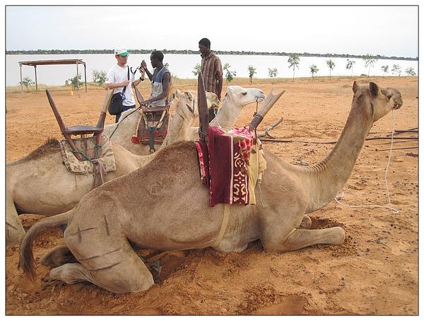 駱駝standby