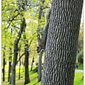 松鼠爬樹~