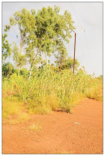 路邊的植物