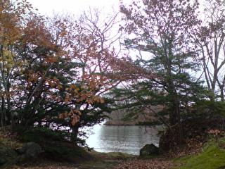 藏匿於楓樹後ㄉ湖畔.JPG