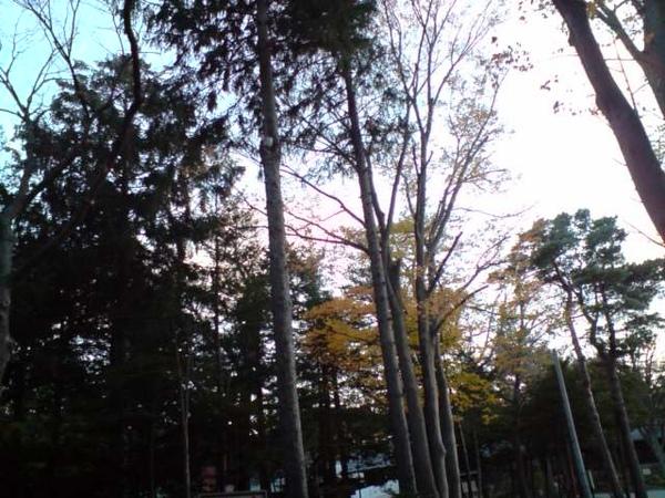 高聳ㄉ樹木.JPG