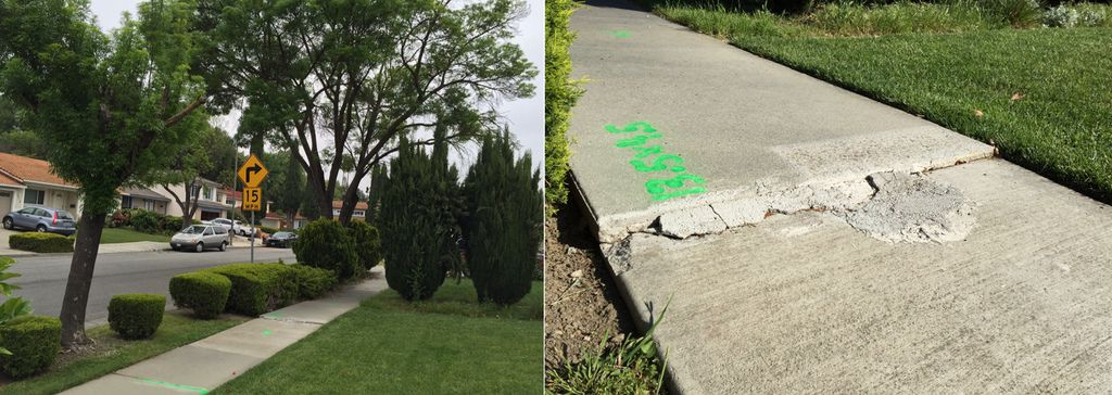tree & sidewalk