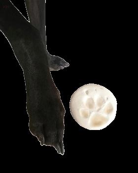 寵物腳印土