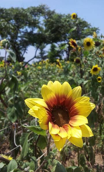 2011-07-24 11.31.01.jpg