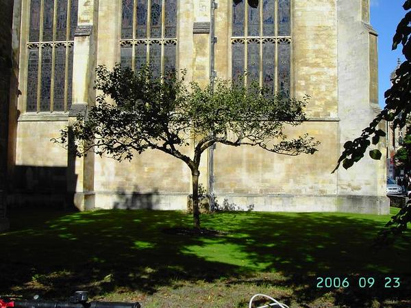 The Apple Tree by Trinity College