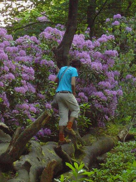4. Josued on a  Big Tree (2)