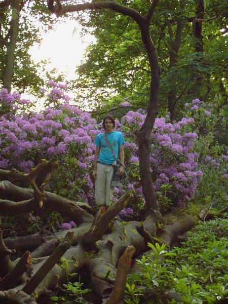 5. Josued on a  Big Tree (3)