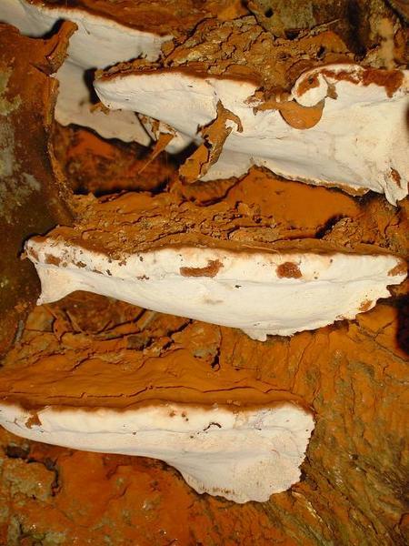 6. Giant Mushrooms