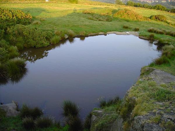 15. A Pond (1)