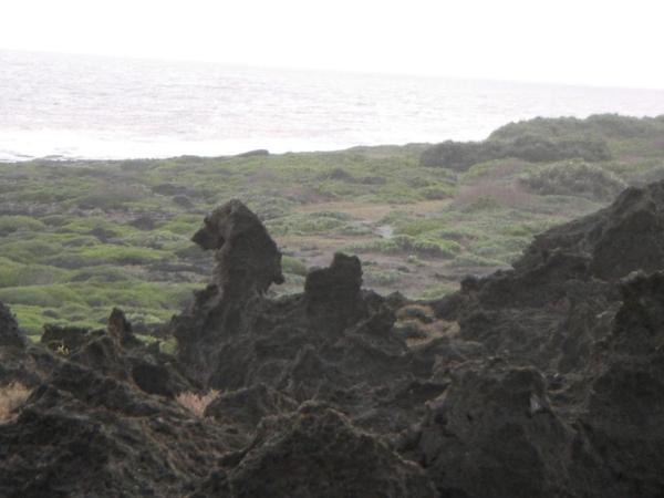12. A rock looks like a lion