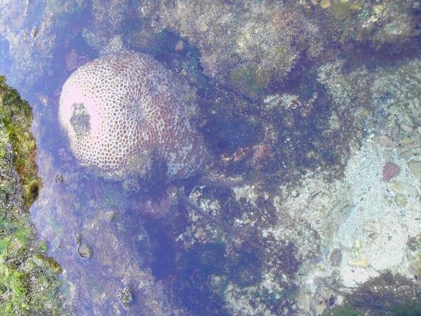 06. Coral reef [珊瑚礁]
