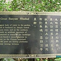 19. The description of the great banyan shaded pond.JPG