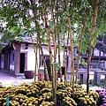 37. The Seven-cord Bamboo.JPG