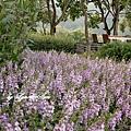 03. Lavender Forest [薰衣草森林不知名的花]