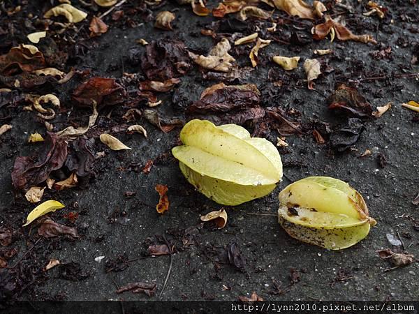 掉在地上的楊桃
