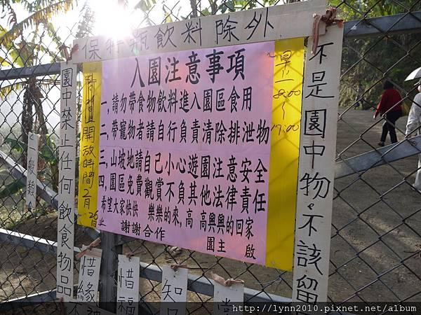 台中大坑濁水巷櫻花林 (46)