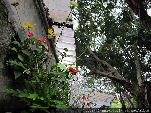 •四四南村• 小盆花