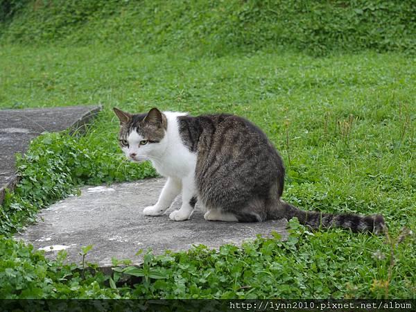 P1130330蘭嶼 氣象局 貓