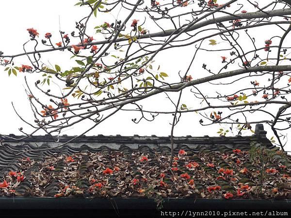 嘉義北門車站-屋頂與花、枯葉