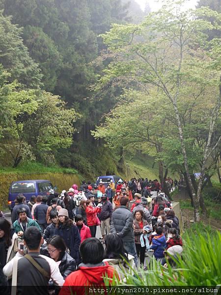 阿里山-森林04 人潮